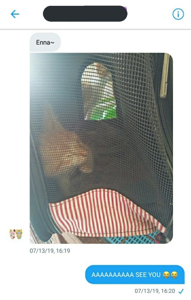 kitten on a carrier